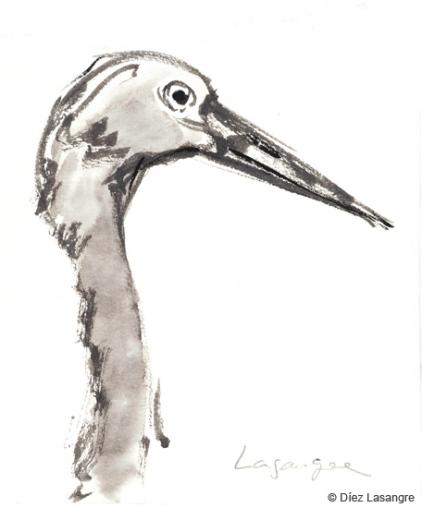 crane grulla