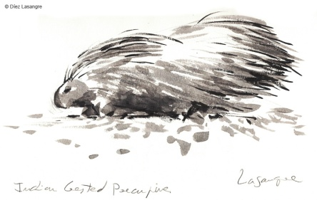 vilas-zoo-03-porcupine