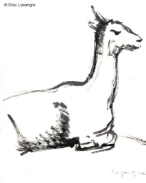 vilas-zoo-04-alpaca