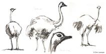 vilas-zoo-05-ostrich