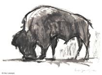 vilas-zoo-06-bison