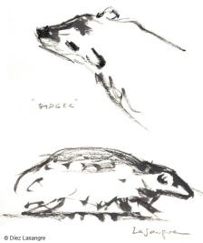 vilas-zoo-07-badger