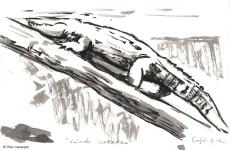 vilas-zoo-10-aligator