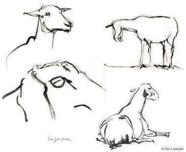 vilas-zoo-13-goats