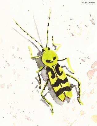apunte-insectos01