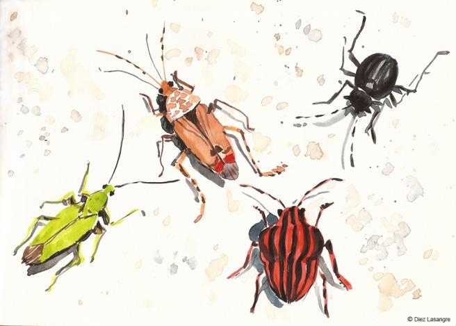 apunte-insectos02