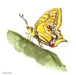 apunte-insectos03